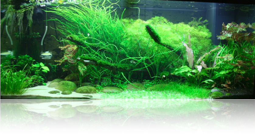Setting Up A Higher Tech Planted Tank Uk Aquatic Plant Society