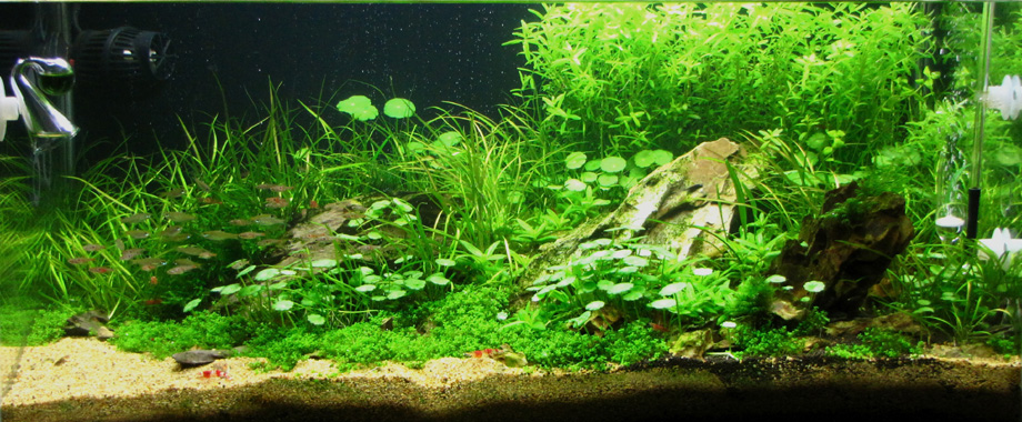 60l Kitchen Tank By Andy Hart Uk Aquatic Plant Society