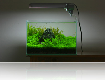 I Have A 20liter Rectangular Tank Which I Would Like To Scape. I Am  Picturing Lots Of U0027carpet Plantsu0027 In The Foreground With Some Taller Grass  In The Back.