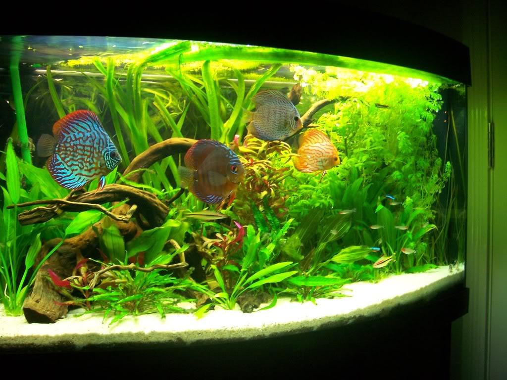vision 180 uk aquatic plant society. Black Bedroom Furniture Sets. Home Design Ideas