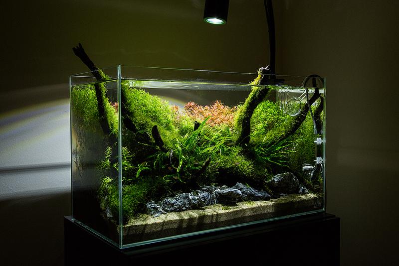 kessil a150w amazon sun review uk aquatic plant society. Black Bedroom Furniture Sets. Home Design Ideas