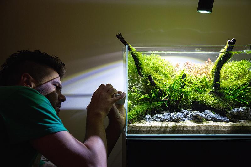 kessil a150w amazon sun review uk aquatic plant society