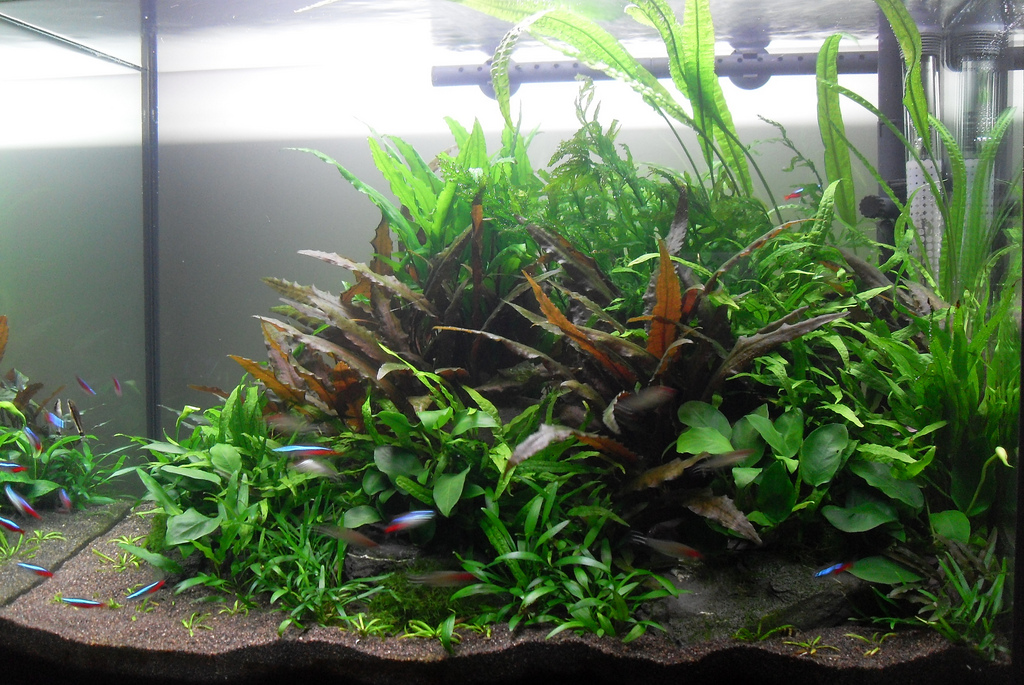 The Soil Substrate Or Dirted Planted Tank - a How to Guide ...