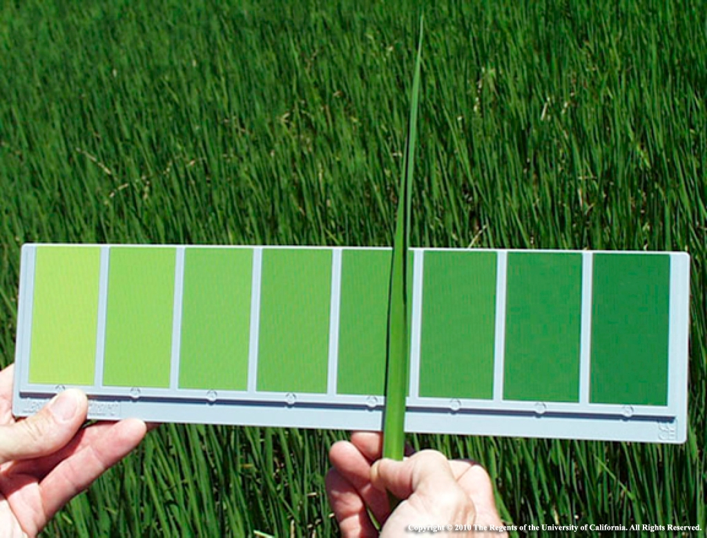 12-rice-leaf-color-chart.jpg