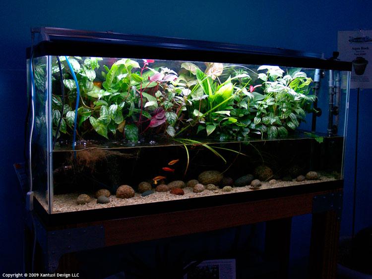 Cryptocoryne riparium page 3 uk aquatic plant society for 55 gallon aquarium decoration ideas