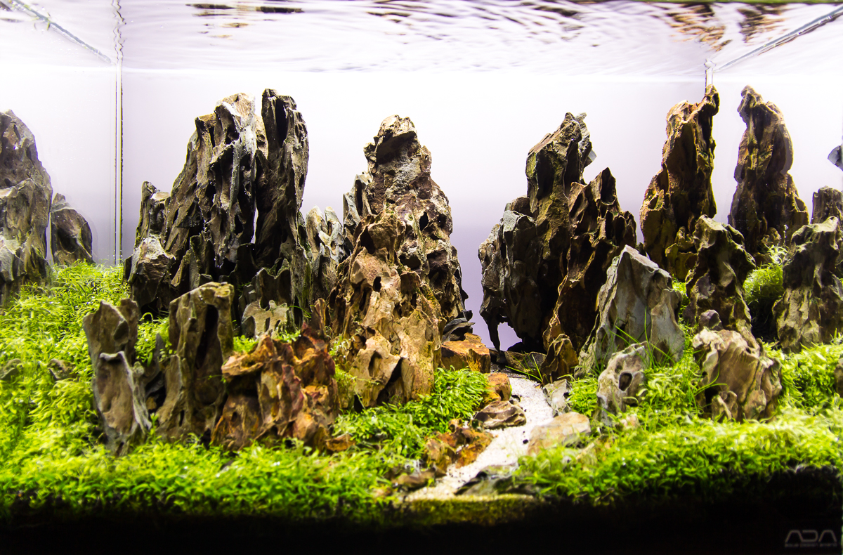 Mot S Aquascapes Added Aga 2015 Aquascapes Uk Aquatic Plant Society