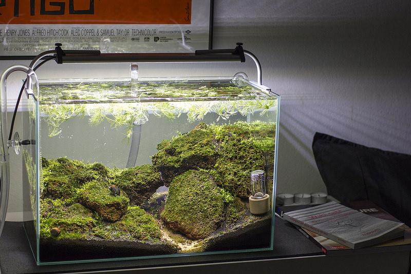 aquarium glasgarten
