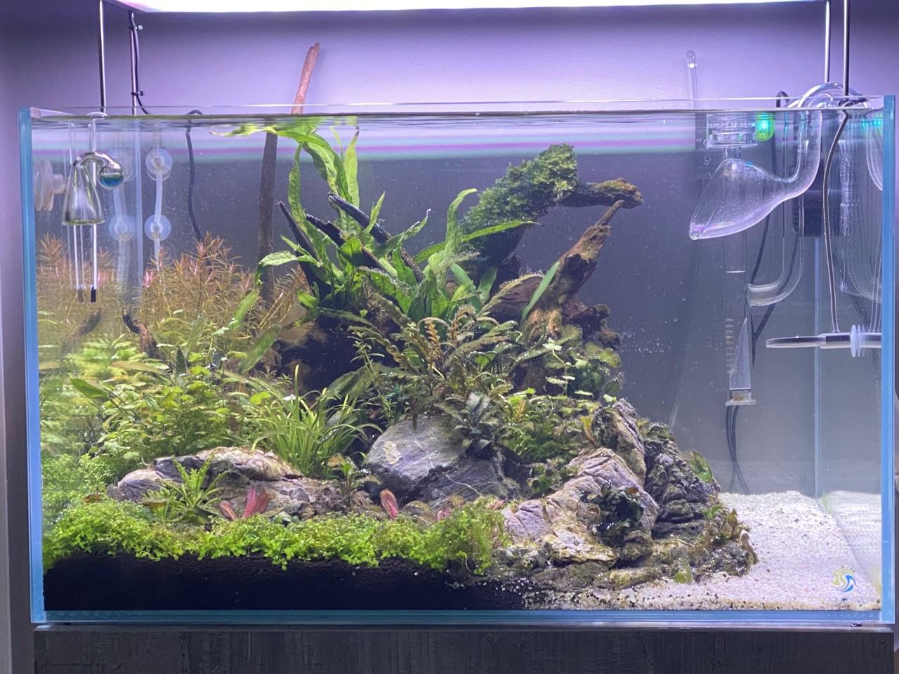 19 fish tank 15.4.20.jpg