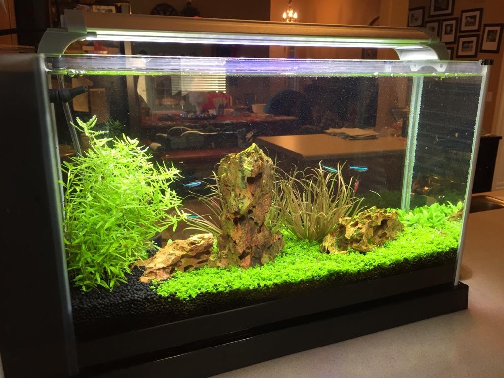 High Tech Fluval Spec V Uk Aquatic Plant Society