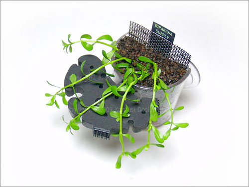 22-v-10-planters-vi-s.jpg
