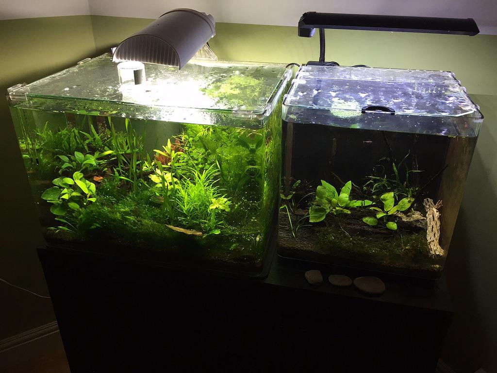 Superfish aquarium fish tank aqua 60 - 24215925125_e0220a49db_b Jpg