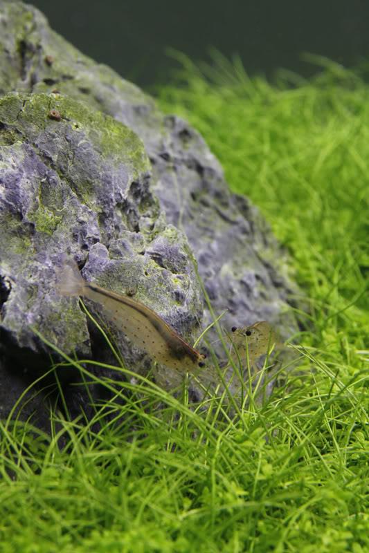 2shrimp.jpg