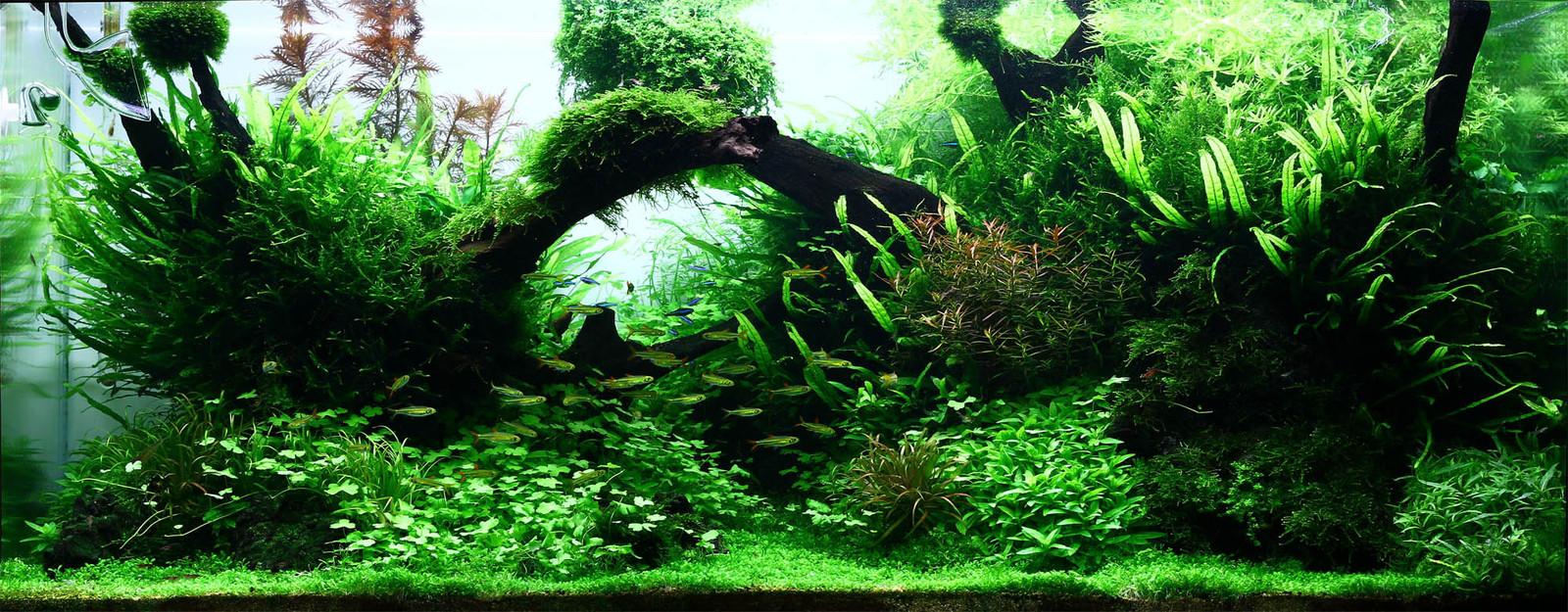 Aquarium 240l pour population type amazonien  - Page 3 360er-aktuell_resize2-jpg