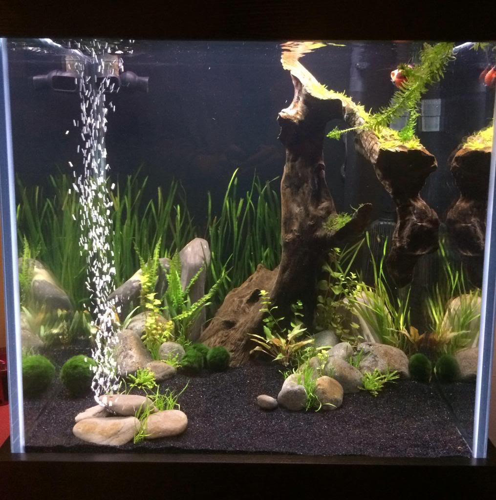 Fancy Goldfish Tank Uk Aquatic Plant Society