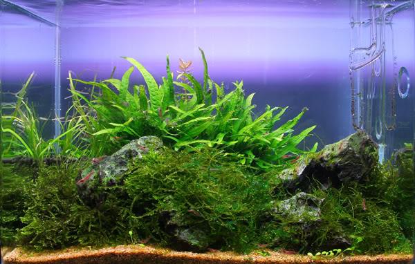 40cm-overgrown.jpg