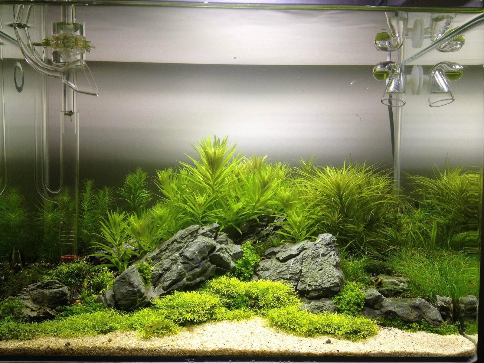 Fish tank antibiotics - 47ajwqy Jpg
