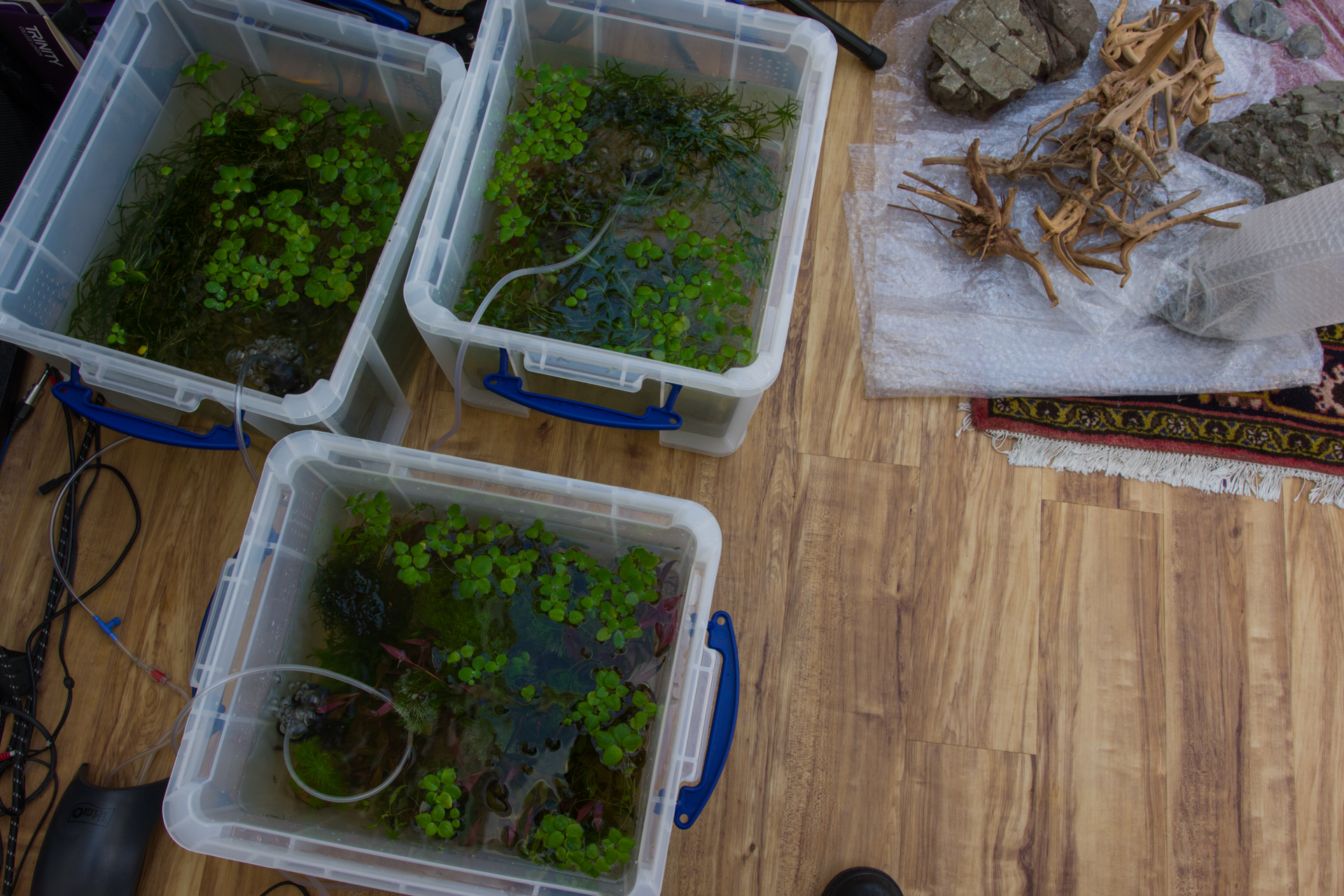 7849 - 01 May- Plant and Shrimp Storage.jpg