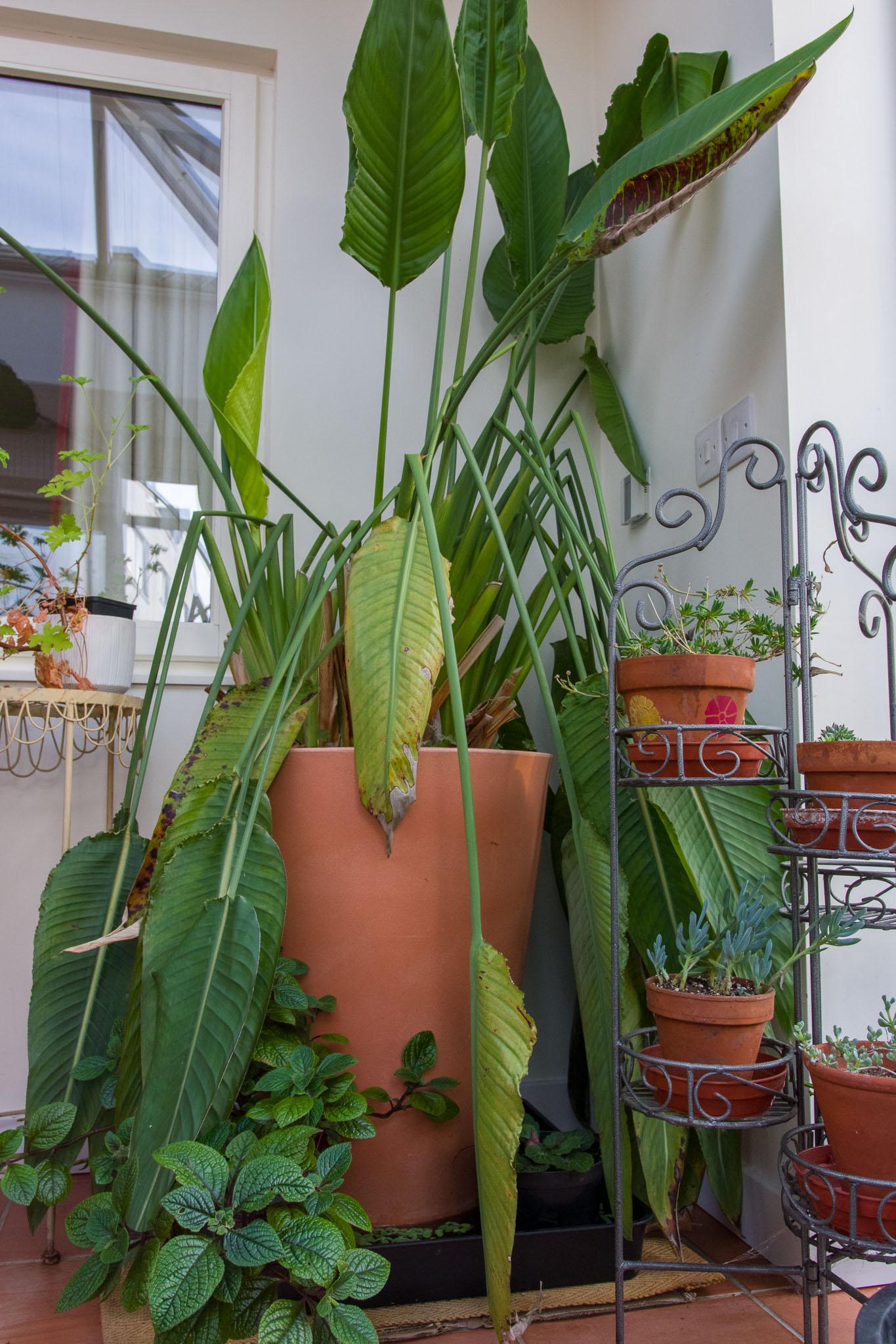 7th November - Water Lettuce Colony_IMGP6853.jpg