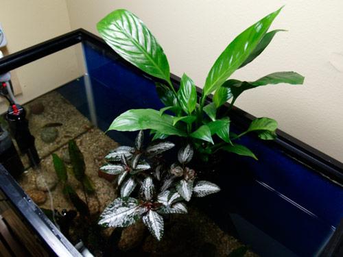 8-i-09-magnet-planter-nano-trellis-ii-s.jpg