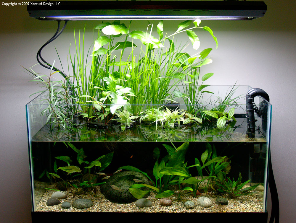 200-liter Riparium Setup for Synodontis Catfish | Page 6 ... 10 Gallon Paludarium