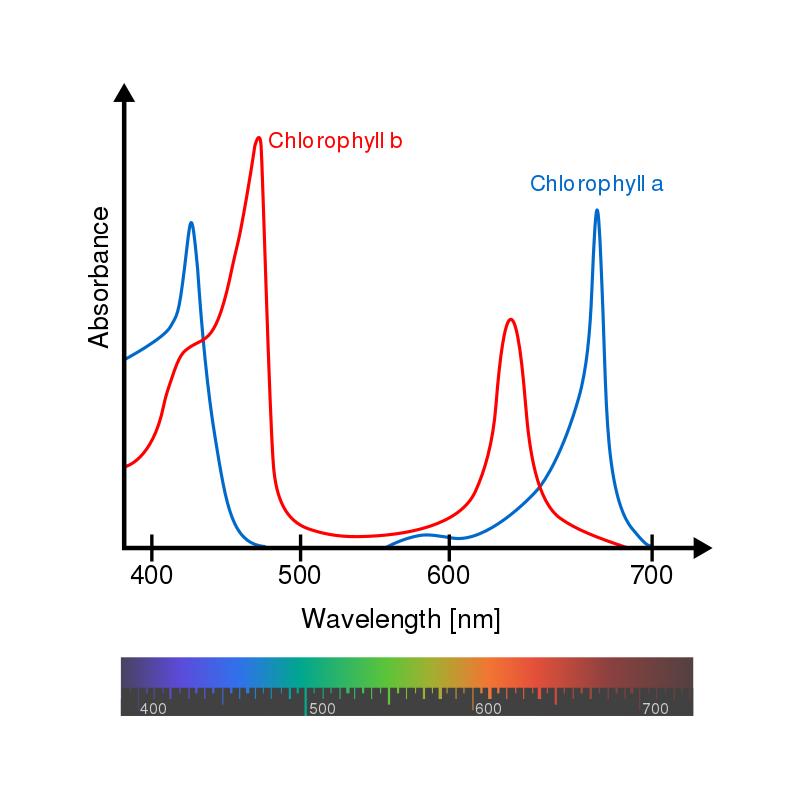 800px-Chlorophyll_ab_spectra-en.svg.png