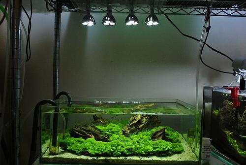 Led Lighting For Planted Aquarium Roselawnlutheran & Planted Aquarium Lighting Led - 1000+ Aquarium Ideas azcodes.com