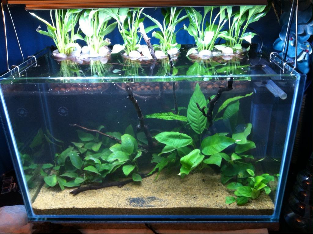 andy d s splendid tank page 2 uk aquatic plant society