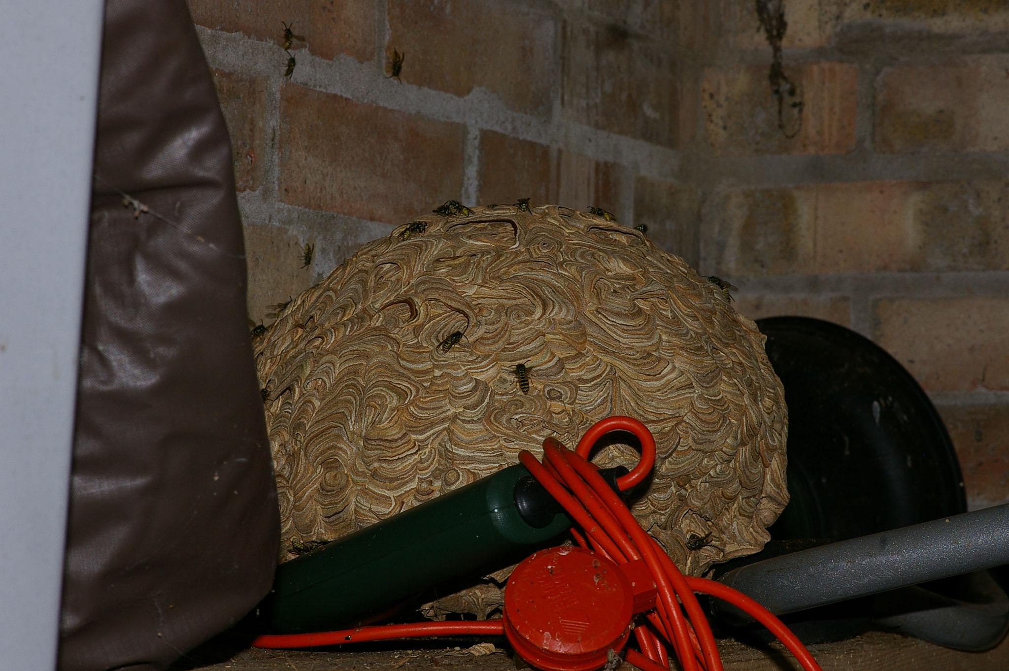 _IMGP8343_Wasp Nest.jpg