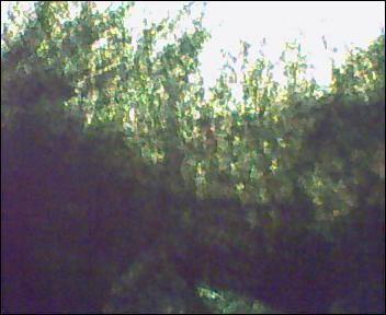 algaeCWtankdec071.jpg