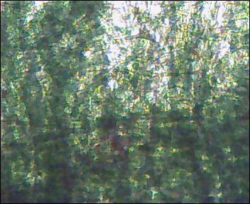 algaeCWtankdec072.jpg