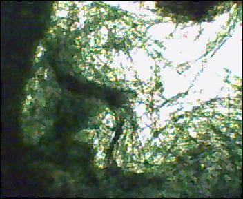 algaeCWtankdec075.jpg