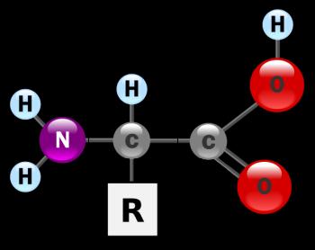 amino_acid.png