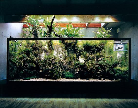 aquao_2007.jpg