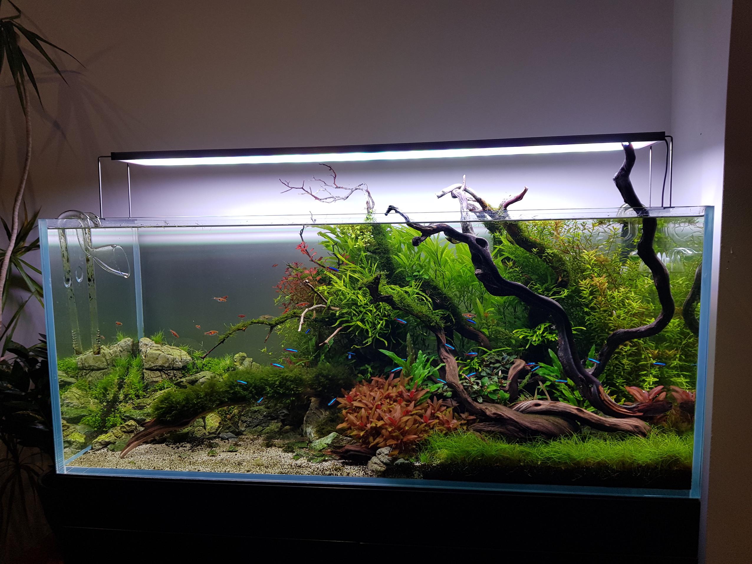Aquarium 250321.jpg