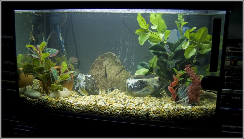 AquariumWhole.jpg