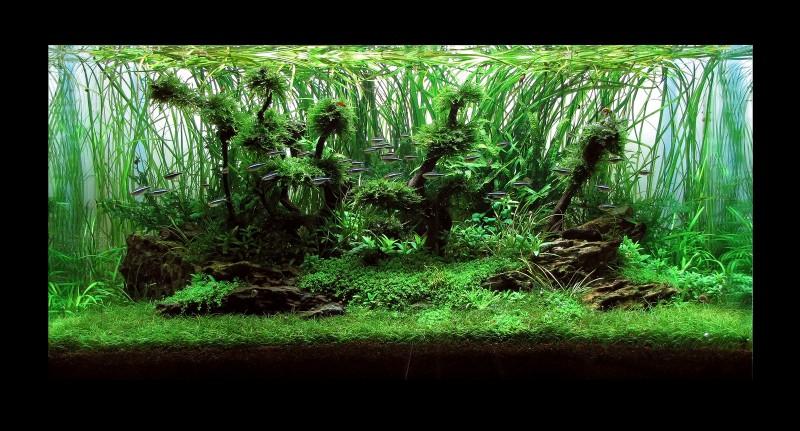 aquascape-224-front-8.jpg