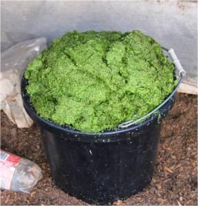 bucket-of-duckweed.jpg