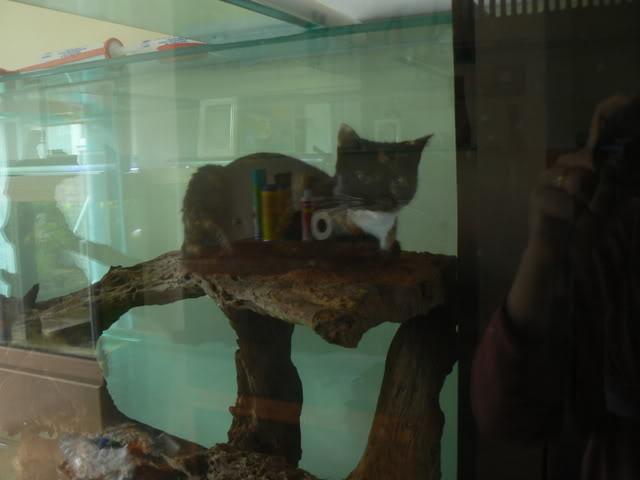 catfish001.jpg