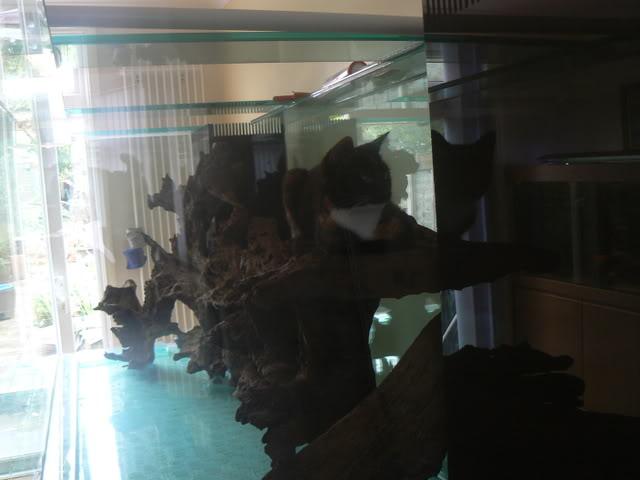 catfish002.jpg