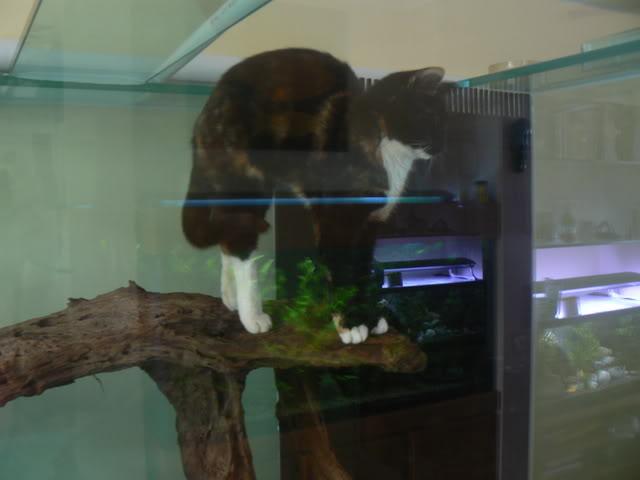 catfish003.jpg