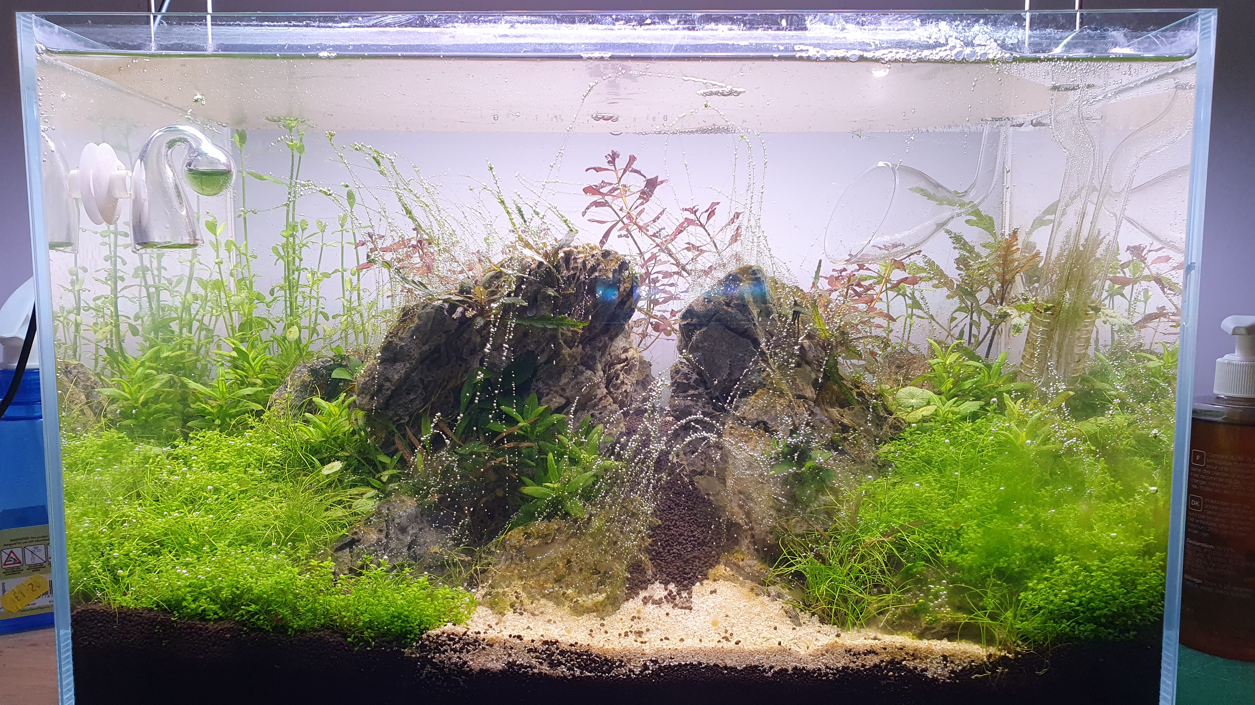 day 15 aquascape.jpg