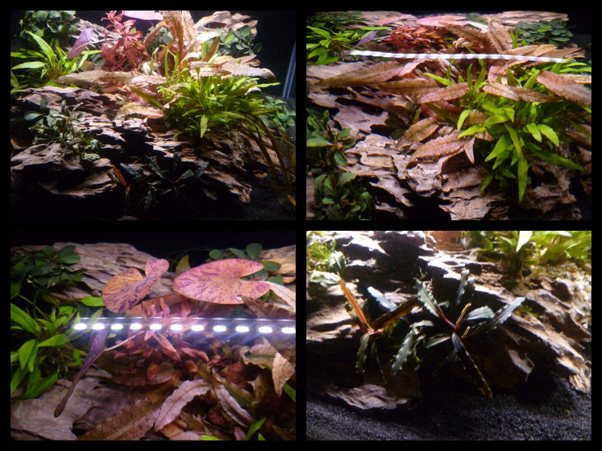 Dennerle Nano Scapers Tank..Collage 1.jpg