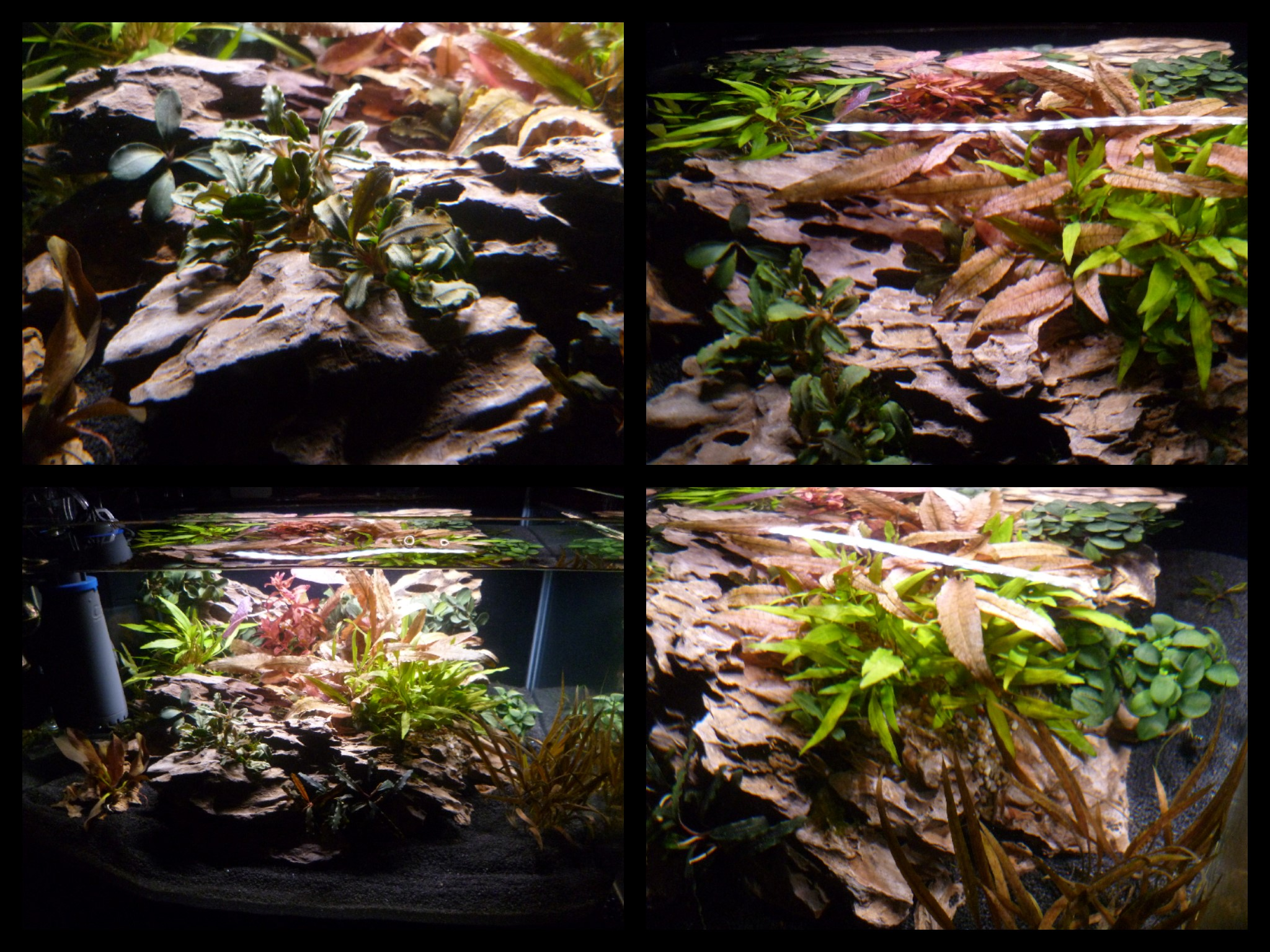 Dennerle Nano Scapers Tank..Collage 2.jpg