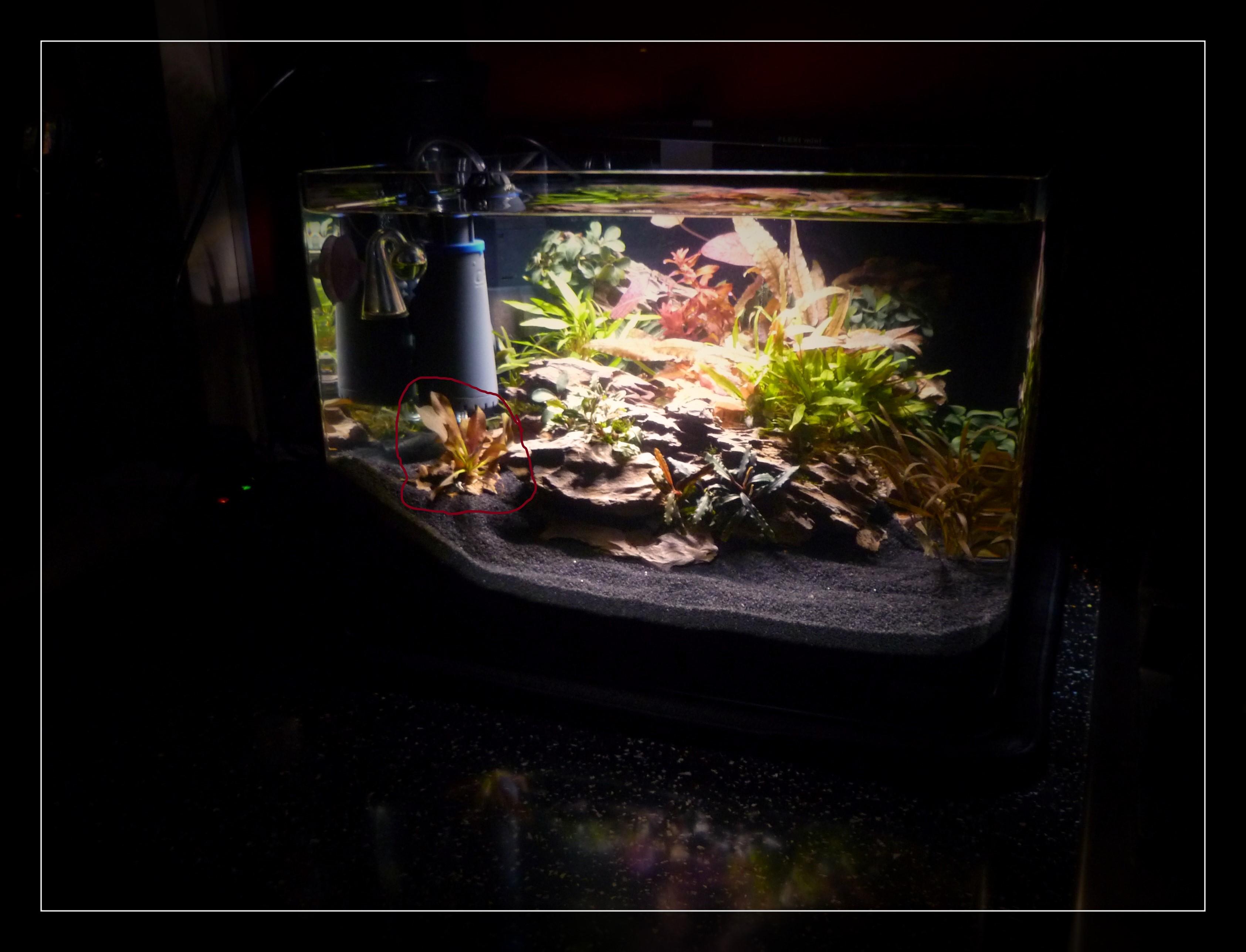 Dennerle Nano Scapers Tank..jpg 2 marked..jpg