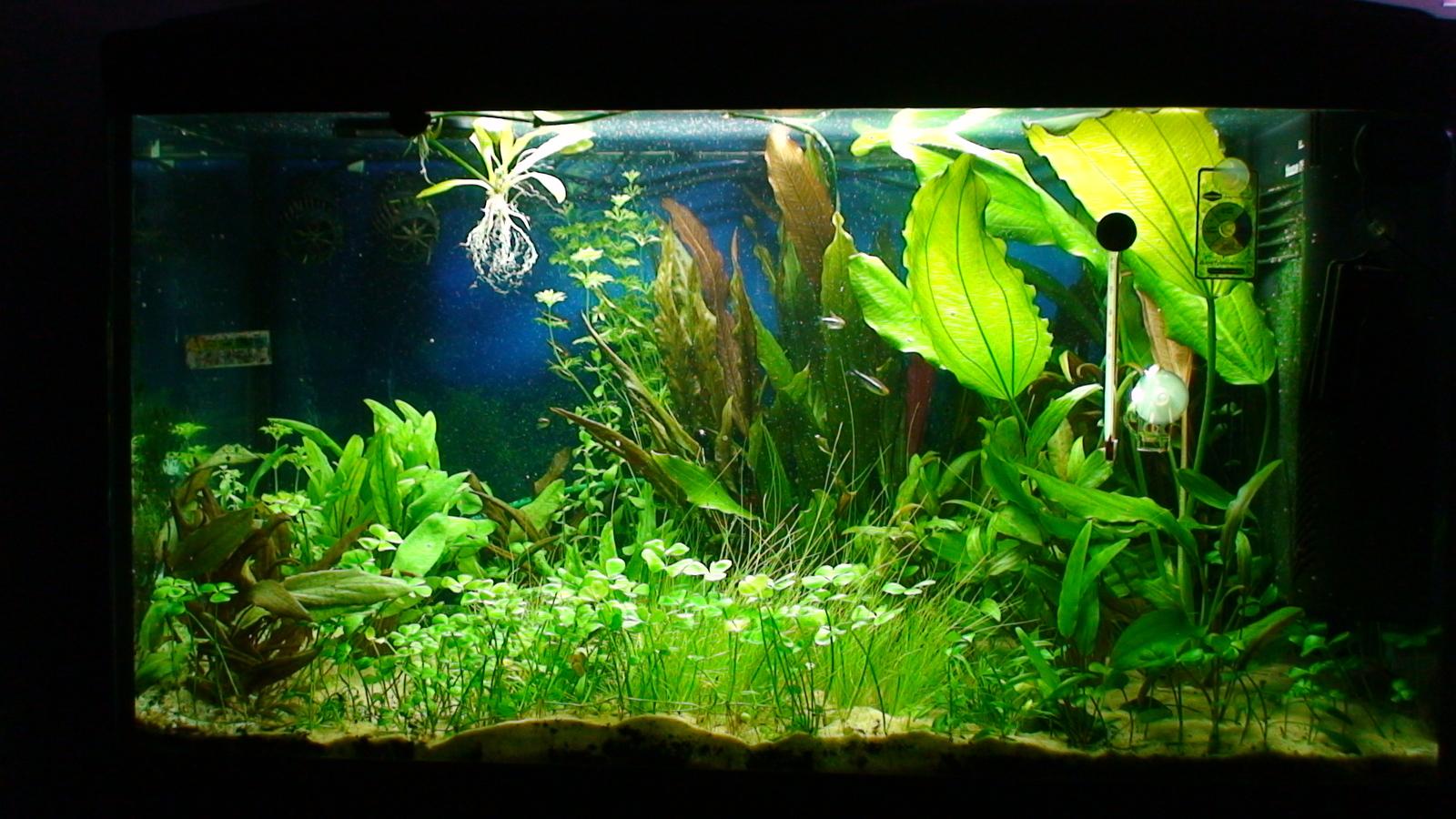 120 litre planted aquarium journal uk aquatic plant. Black Bedroom Furniture Sets. Home Design Ideas