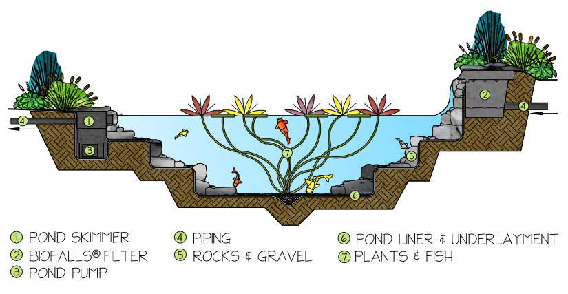 Ecosytem-Pond-How-it-Works.jpg