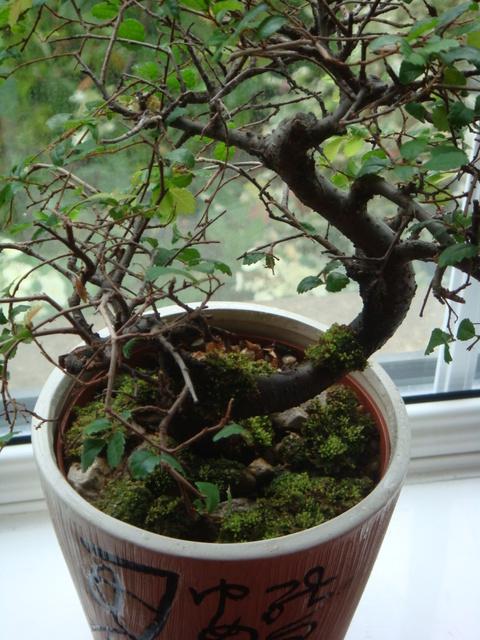 emersedgrowing021.jpg
