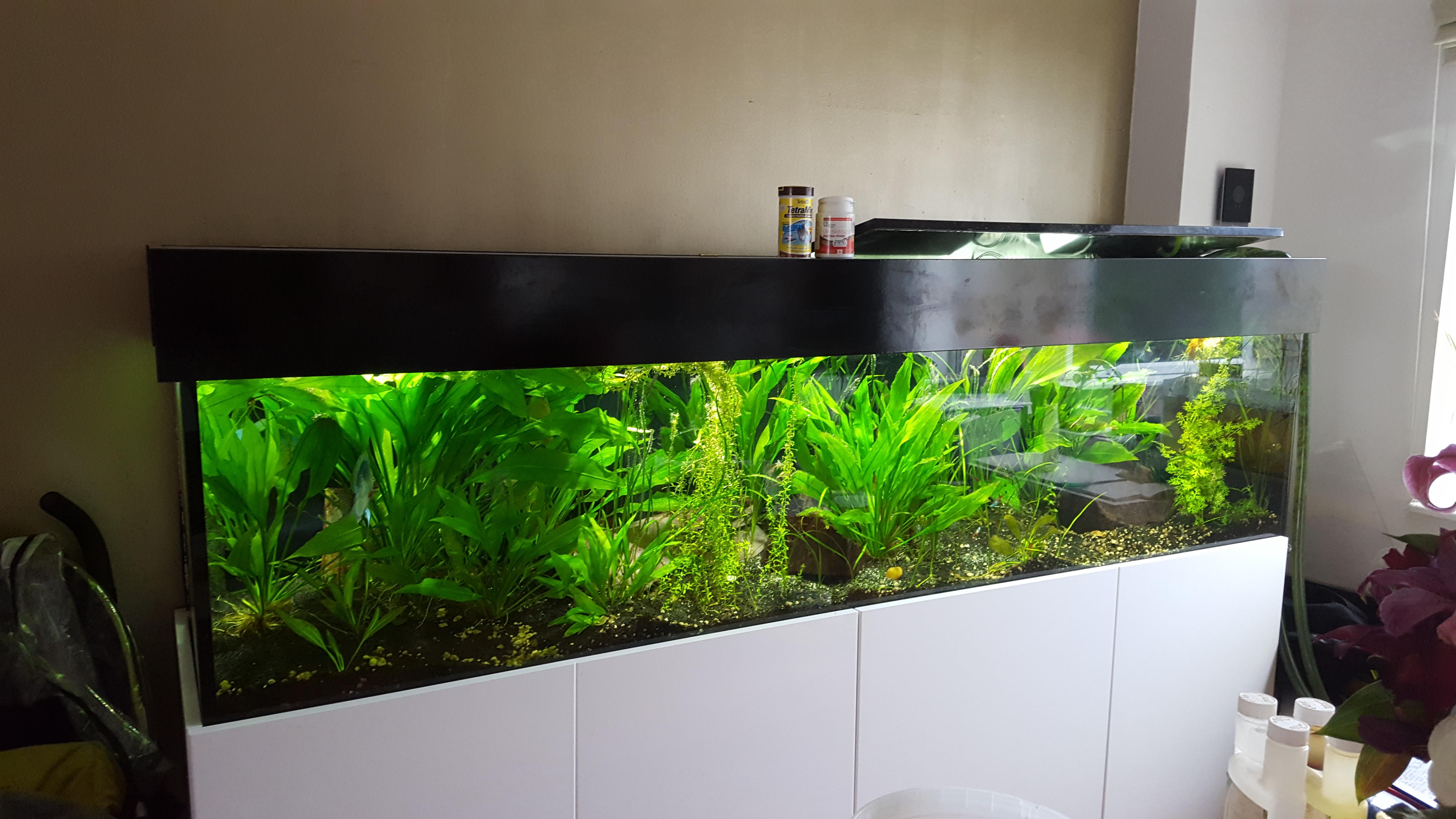 fish-tank1-jpg.jpg