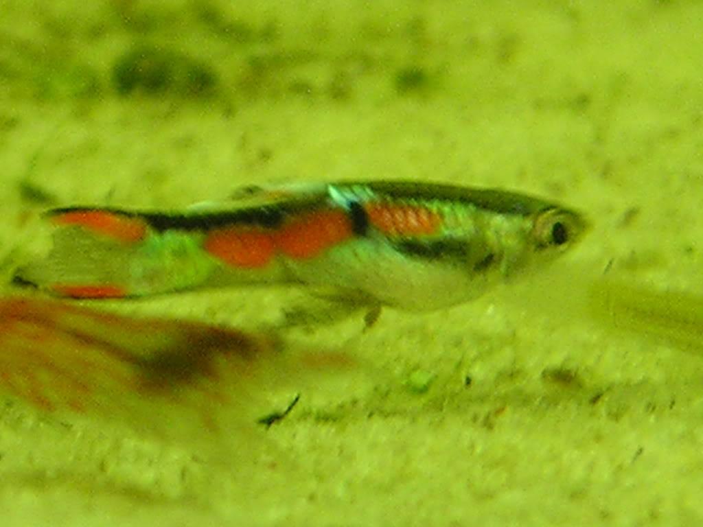 fish016.jpg