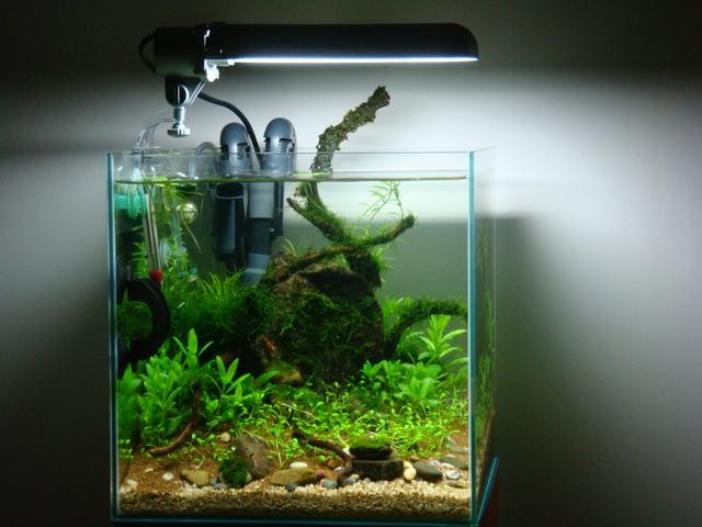 fishtank002.jpg